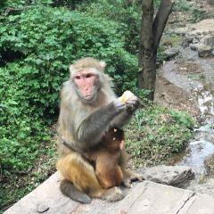 黔靈山公園用戶圖片