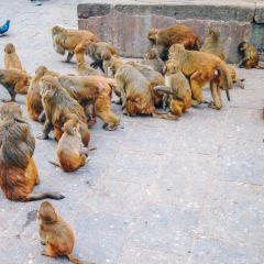 猴廟用戶圖片