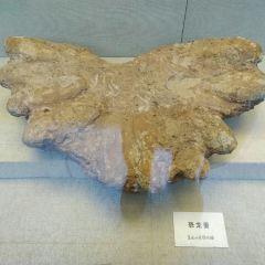 Heilongjiang Liao and Jin Dynasties History Museum User Photo