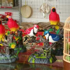 Bird Paradise User Photo