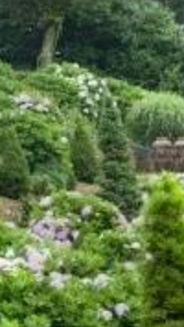 Camellia Hill