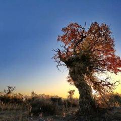 駝鈴夢坡沙漠生態景区のユーザー投稿写真