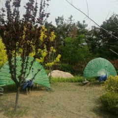 다롄 뤼순 카이순 온천 리조트 여행 사진