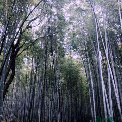 寶岩生態觀光園用戶圖片