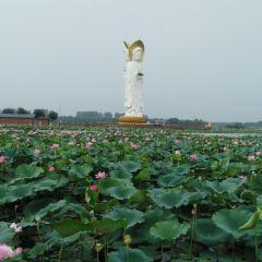 Yuanfei Lotus Garden User Photo