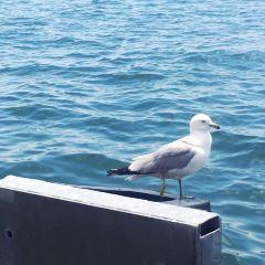 Lake Ontario User Photo