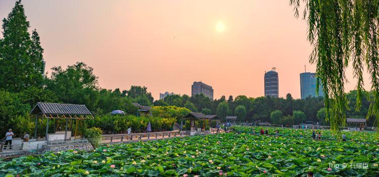 紫荊山公園3