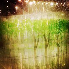 Shanghai Museum of Contemporary Art User Photo