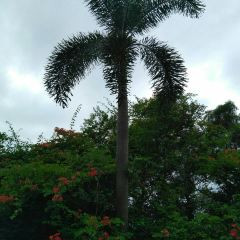 Xiamen Botanical Garden User Photo