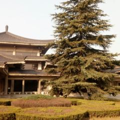 Tan Dynasty Art Museum User Photo
