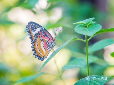 女王蝴蝶園