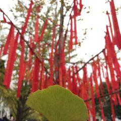 마오쯔펑 린창 여행 사진
