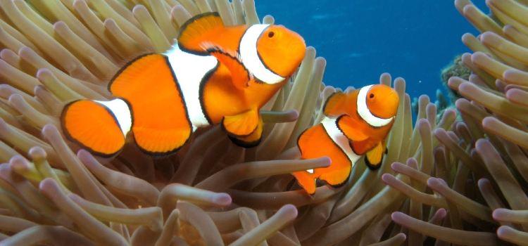 Cairns Aquarium3