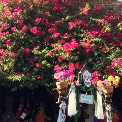 Olvera Street User Photo
