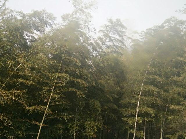 저둥대나무관광지