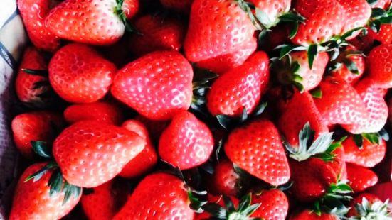 喬氏草莓園