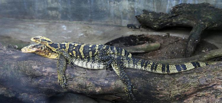 Davao Crocodile Park3