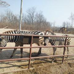 Jinan Wildlife World User Photo