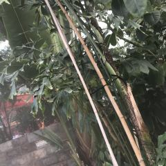 Xiaotang Hot Spring User Photo