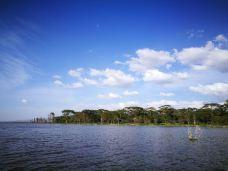 奈瓦沙湖-纳库鲁-M29****1262