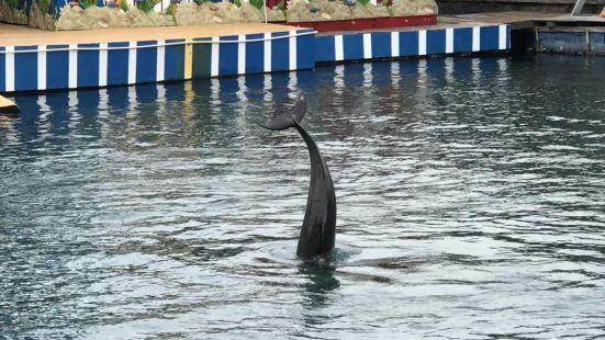 分界洲島+海豚表演