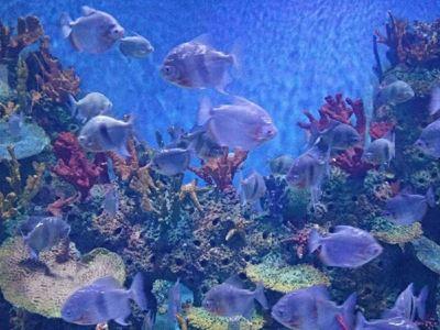 巴中海洋樂園