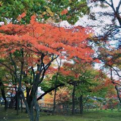 Iwate Park User Photo