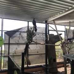 開恩茲野生動物圓頂展館用戶圖片