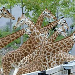 巴黎動物園用戶圖片