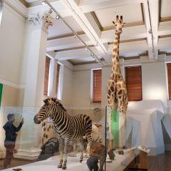 Australian Museum User Photo