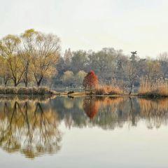 前湖公園用戶圖片