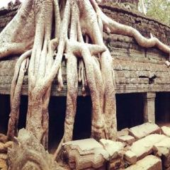 Angkor Archaeological Park User Photo