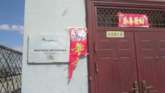 中國黃河濕地博物館鳥類圖片館