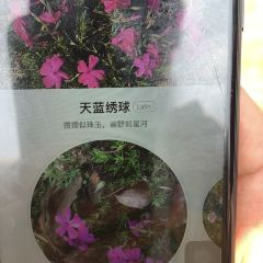 芝櫻小鎮用戶圖片