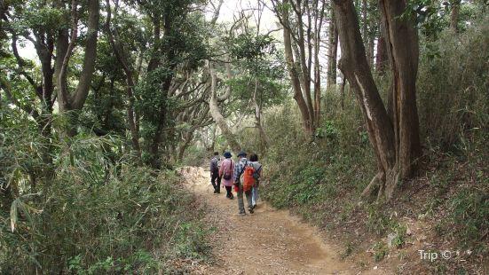 Kuzuharaoka-Daibutsu Hiking Trail