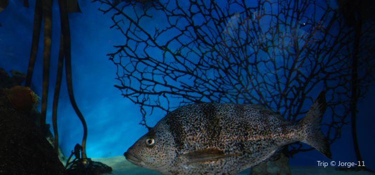兩大洋水族館3