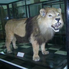 索菲婭國家自然歷史博物館用戶圖片