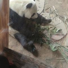 Ai Bao Yesheng Dongwu World User Photo