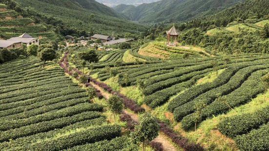 皇后山茶莊園