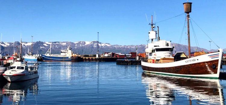 Salka Whale Watching1