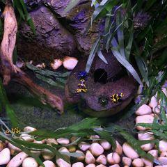 Antalya Aquarium User Photo