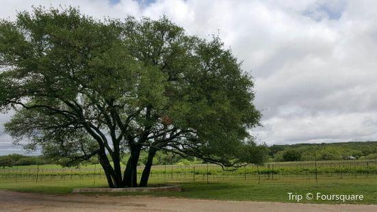 Texas Hills Vineyards
