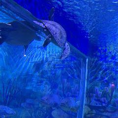 臨沂海洋世界主題公園用戶圖片