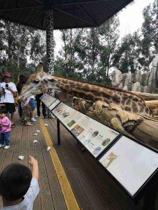 云南野生动物园-昆明