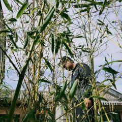 Putaogou Sceneic Area User Photo