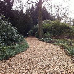 Sheffield Winter Garden User Photo
