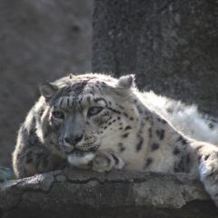 Moscow Zoo User Photo