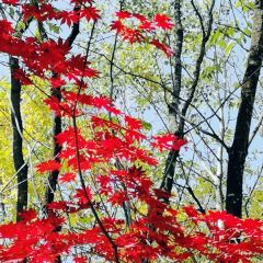 Hancongling Maple Leaf Red Tourism and Leisure Area User Photo