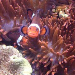 丹佛市區水族館用戶圖片