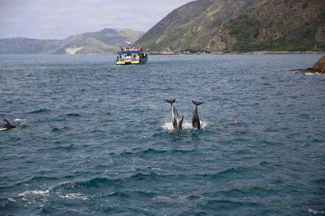 凱庫拉觀鯨遊船